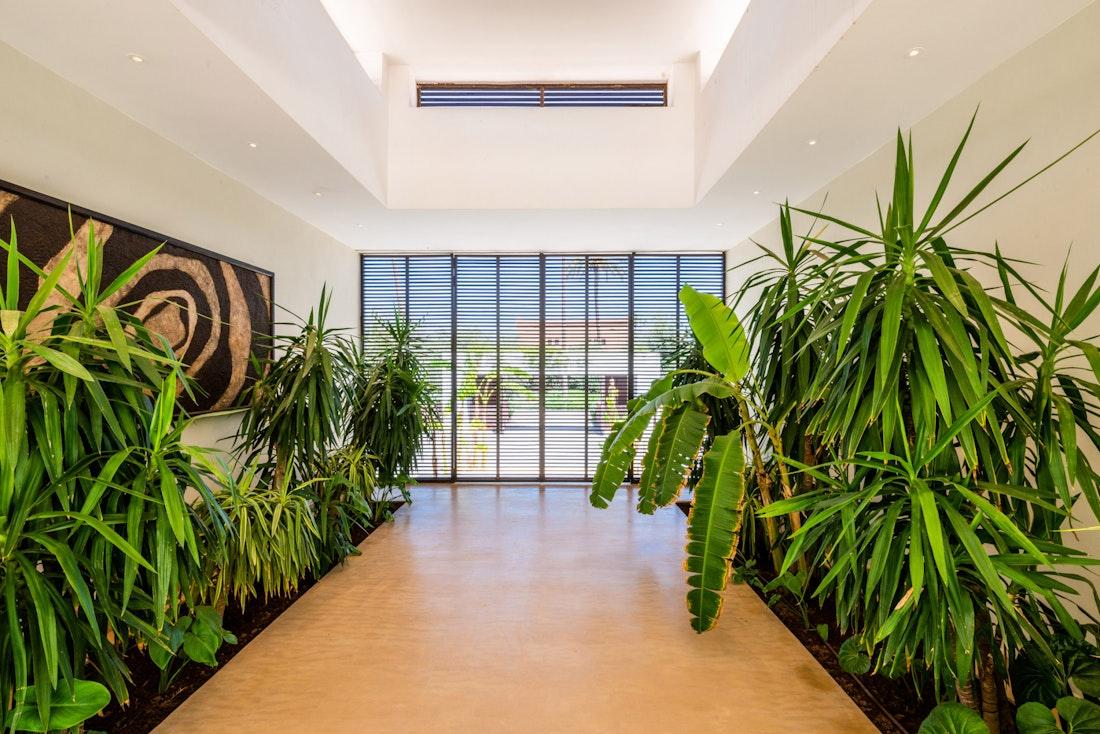 Indoor patio plants at Zagora private villa in Marrakech