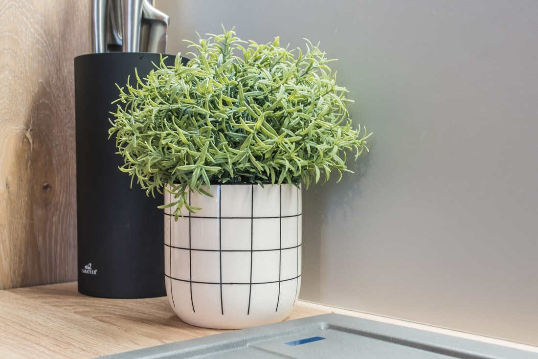 Green plant in a white checked pot